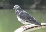 Ne prenons pas les militaires chinois pour des pigeons