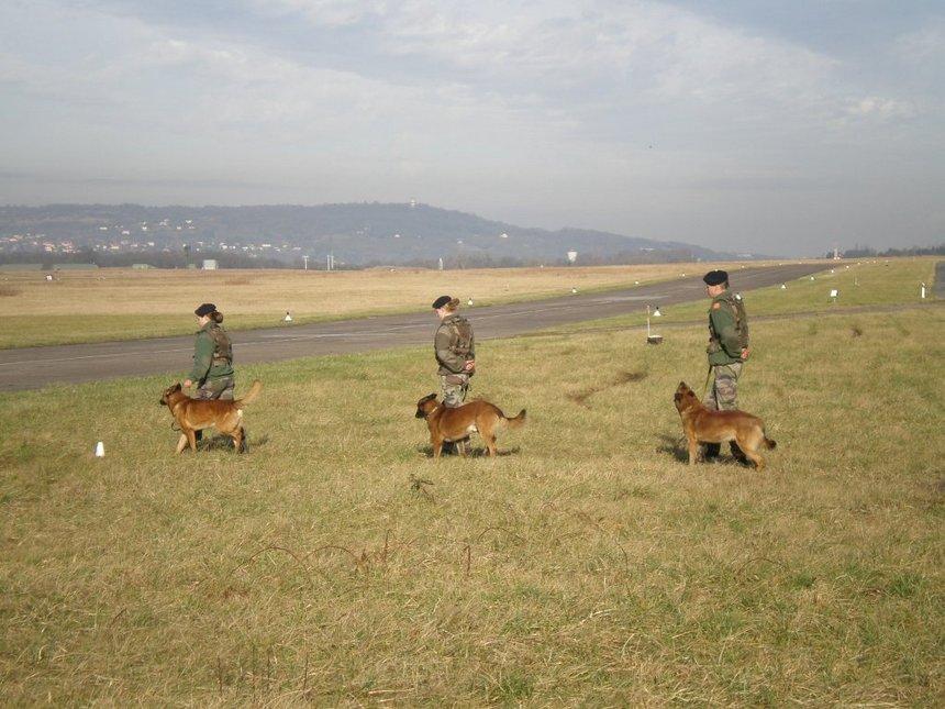 Démonstration des maîtres-chiens de la BA 128